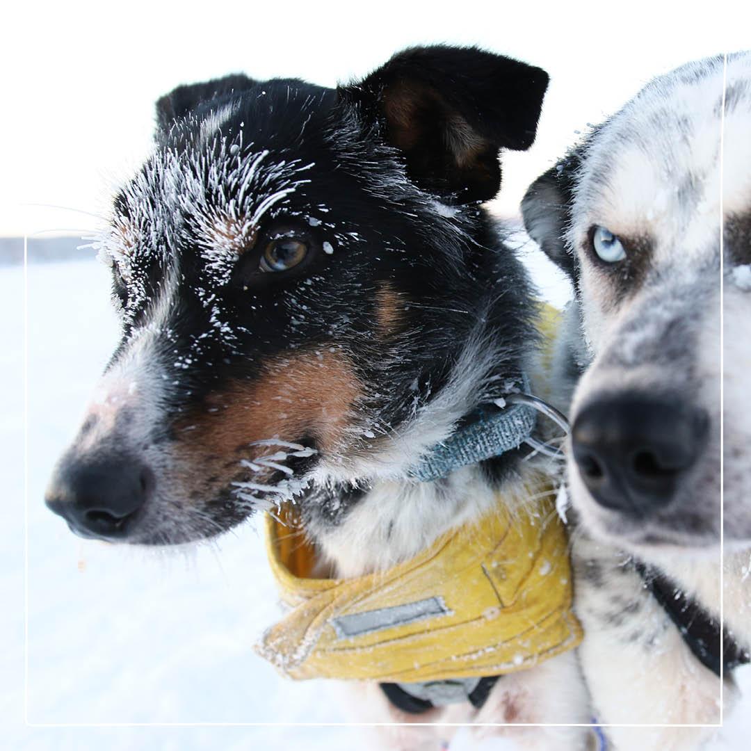 avliva hund hemma kostnad