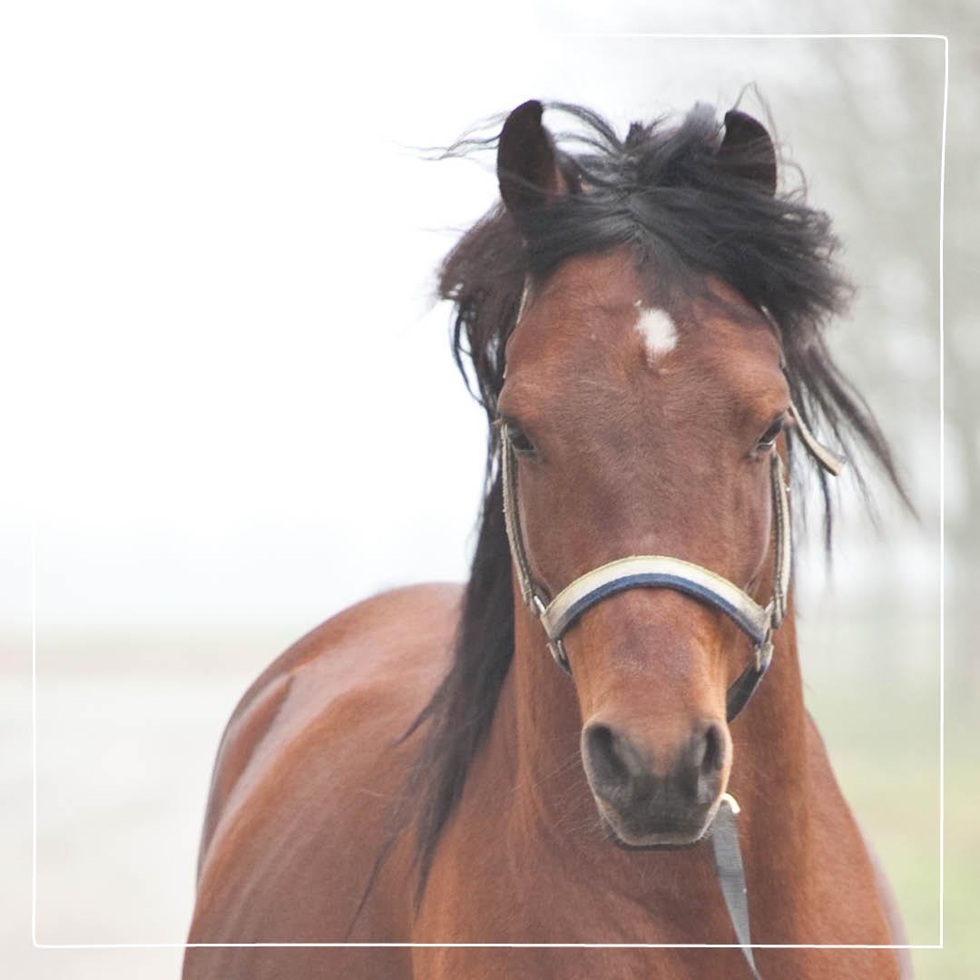 köpa avmaskningsmedel häst