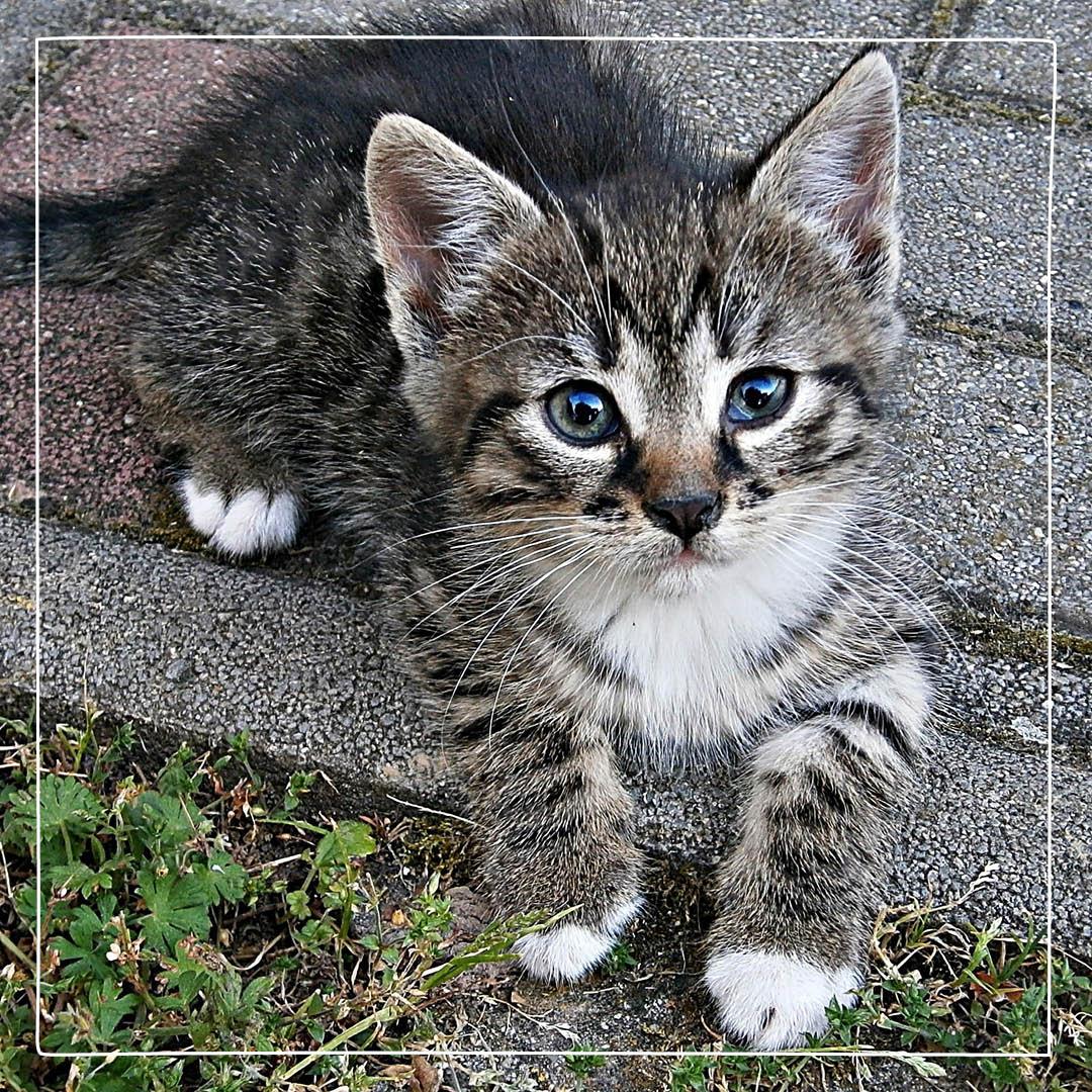 sår efter fästing katt